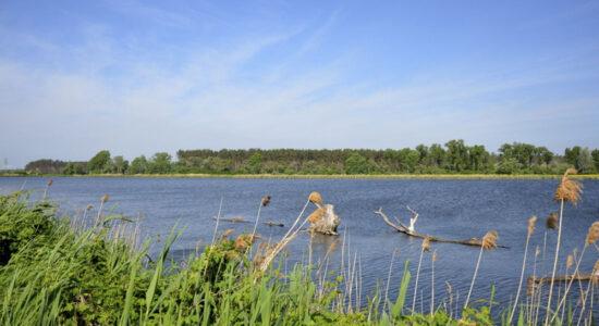 Jakubovské rybníky